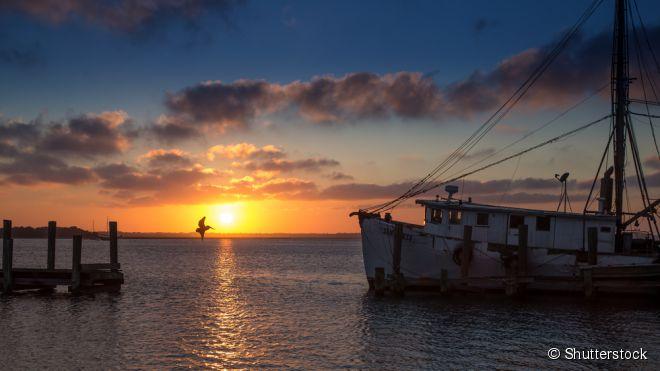 Na Ilha Amelia, tente pegar o Amelia River Cruise, um passeio de barco no qual os amantes de praia adorarão observar os surfistas e as dunas locais