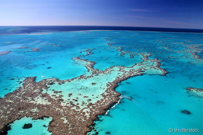 A Grande Barreira de Corais está com risco de desaparecer! Você não pode perder a chance de conhecê-la antes, que isso aconteça!