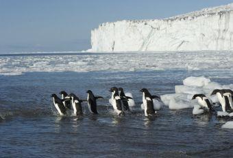 Antártica vai abrigar maior reserva marinha do mundo