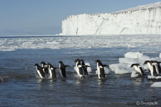 Região abriga um terço da população de pinguins de Adélia e pinguins imperadores do planeta