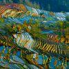 Campos de Arroz em Yuanyang, China:  durante a época de chuvas, os campos de arroz da província de Yuanyang se tornam um espelho do céu, refletindo cores intensas. O cultivo exite há mais de mil anos e a tradição passa de geração a geração. O local se tornou uma importante atração turística e diversas agências fazem passeios para conhecer a região.