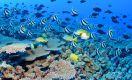Havaí ganha a maior reserva natural do mundo