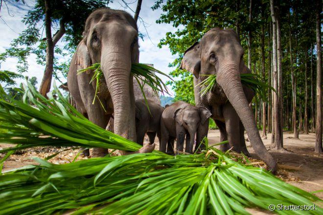 A boa é procurar os santuários etnicamente corretos da Tailândia