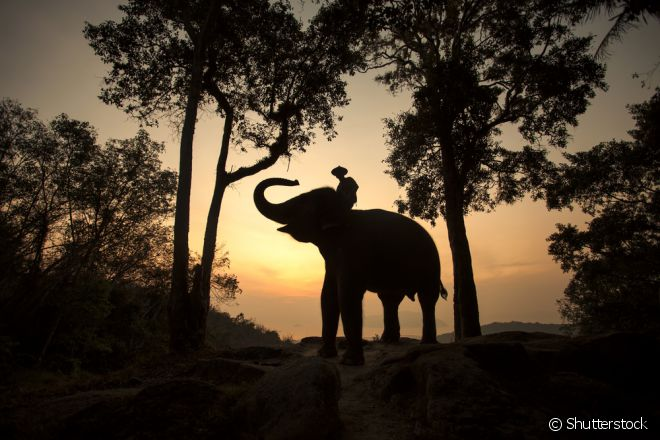 Entre os principais atrativos da Tailândia estão os santuários de elefantes