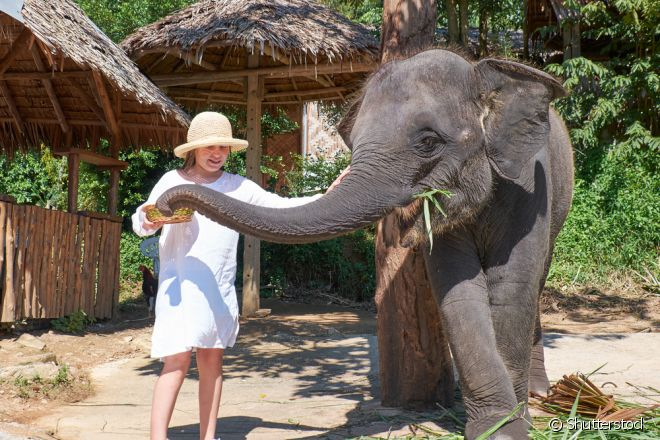 O contato com esses animais pode ser incrível