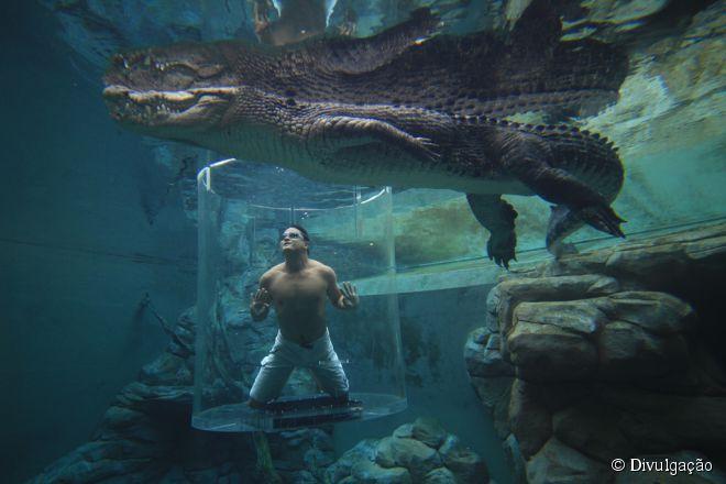Crocosaurus Cove, Austrália:  localizado na cidade de Darwin, o parque proporciona a experiência de ficar perto de gigantes crocodilos de água salgada australianos. A atração mais famosa é a Cage of Death, um tubo de vidro em que é possível ficar frente a frente com o animal amedrontador. Para quem prefere menos emoções, há uma piscina com vidro protetor ao lado do tanque de crocodilos, aquários, santuário de tartarugas e a possibilidade de pegar em um filhote de crocodilo
