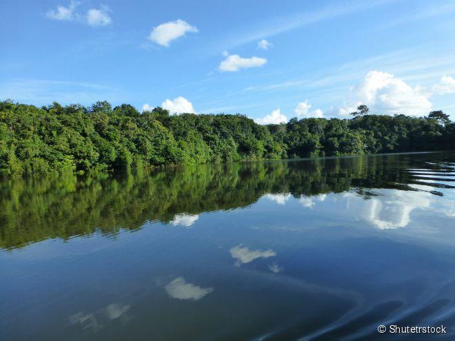 Floresta Amazônica, Amazonas -  A maior e mais diversificada floresta tropical do mundo tem mais de 40 mil espécies de plantas, árvores que passam dos 100 metros de altura, rios ideais para a pesca esportiva, cachoeiras de águas límpidas e fauna exuberante. Assim como as Cataratas do Iguaçu, a floresta foi eleita em 2011 como uma das Sete Maravilhas da Natureza.