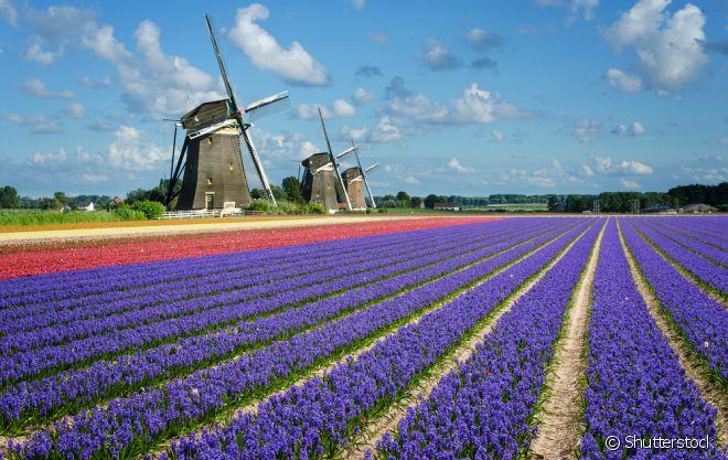 Os campos de flores de Keukenhof, na Holanda, são incríveis! Não há quem não se encante com a mistura de cores...
