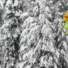 China Peak - Localizado no oeste de High Sierra, na Floresta Nacional Sierra, o China Peak é um dos locais preferidos dos praticantes de ski e snowborad do Vale Central. O objetivo do resort é poder oferecer algo para todas as idades. As crianças podem aprimorar suas habilidades no Burton Progression Park, enquanto os mais avançados treinam saltos, giros e rolagens nas pistas.