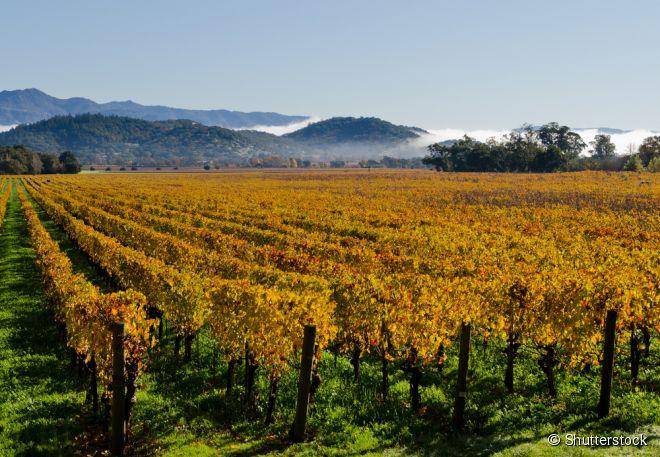 As vinícolas de Sonoma e Napa Valley produzem alguns dos vinhos mais bem conceituados do mundo e estão a poucos quilômetros de centro de São Francisco