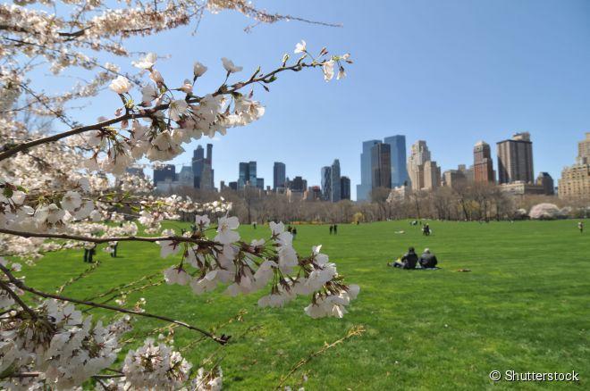 Central Park: o branco do inverno dá lugar ao verde e ao colorido da primavera