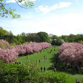 Turismo em Nova York: o que fazer na cidade durante a primavera