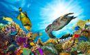 Ilha no Timor Leste tem maior biodiversidade marinha do mundo