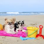 A praia é perfeita para cães e amantes de...