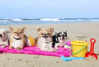 Califórnia tem praia perfeita para quem ama cachorros