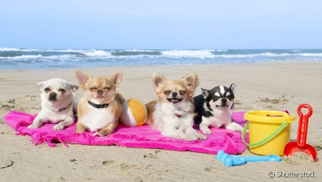 A praia é perfeita para cães e amantes de animais