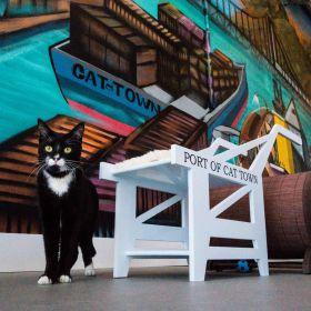 """Estados Unidos ganha o seu primeiro """"Cat Café"""""""