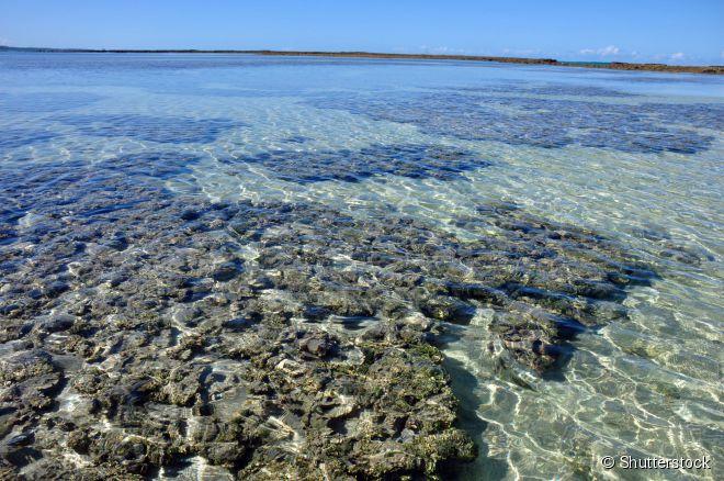 A sensação de Maragogi, no norte de Alagoas, são as piscinas naturais de águas cristalinas