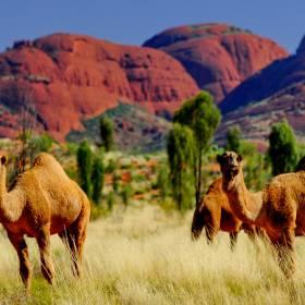 Austrália: os melhores parques nacionais do país