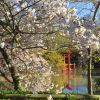 Brooklyn Botanic Garden, Nova York:  fundado em 1910, este jardim representa o melhor da jardinagem urbana. Localizado nas vizinhanças do Prospect Park, possui uma extensa coleção de plantas e hortaliças. Destaque para as três estufas com plantas tropicais e desérticas e para a edificação dedicada às espécies aquáticas. Funciona de terça a domingo, das 8h às 18h (sábado e domingo abre somente às 10h).
