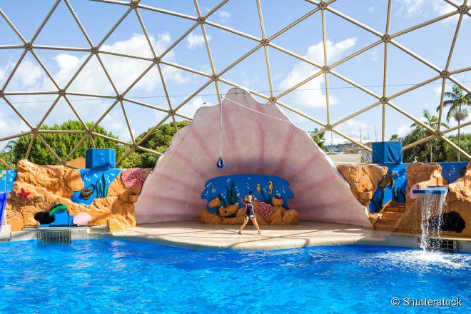 O Seaquarium possui enormes aquários de animais marinhos e shows