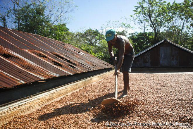 Um dos passeios mais interessantes é conhecer as fazendas de cacau da região, conhecendo desde o plantio até a fabricação do chocolate