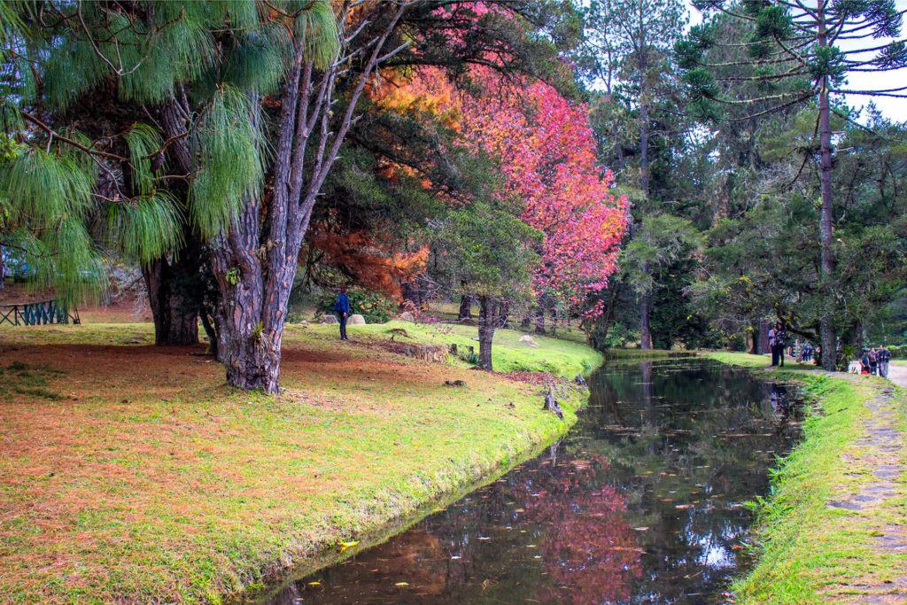 Parque Estadual de Campos do Jordão - Horto Florestal