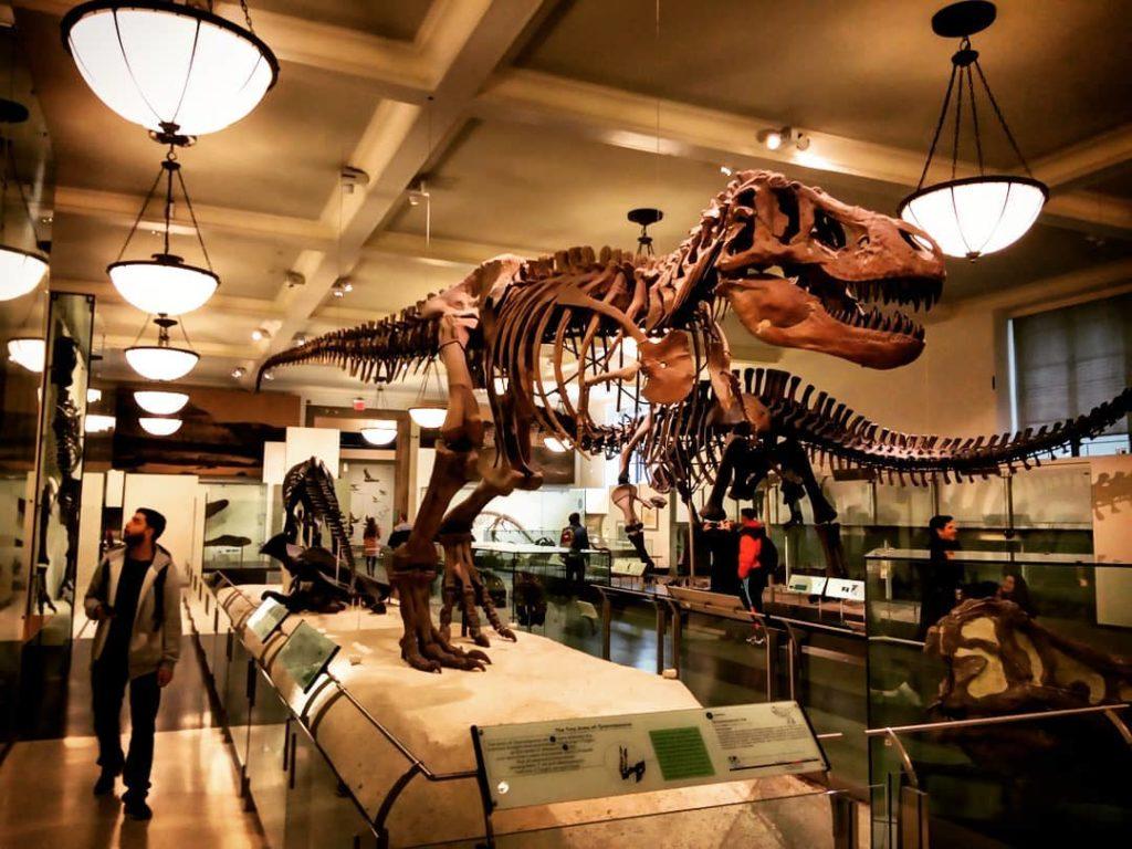 O que fazer em Nova York: Museu de História Natural