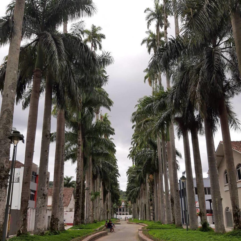 Rua das Palmeiras - Joinville