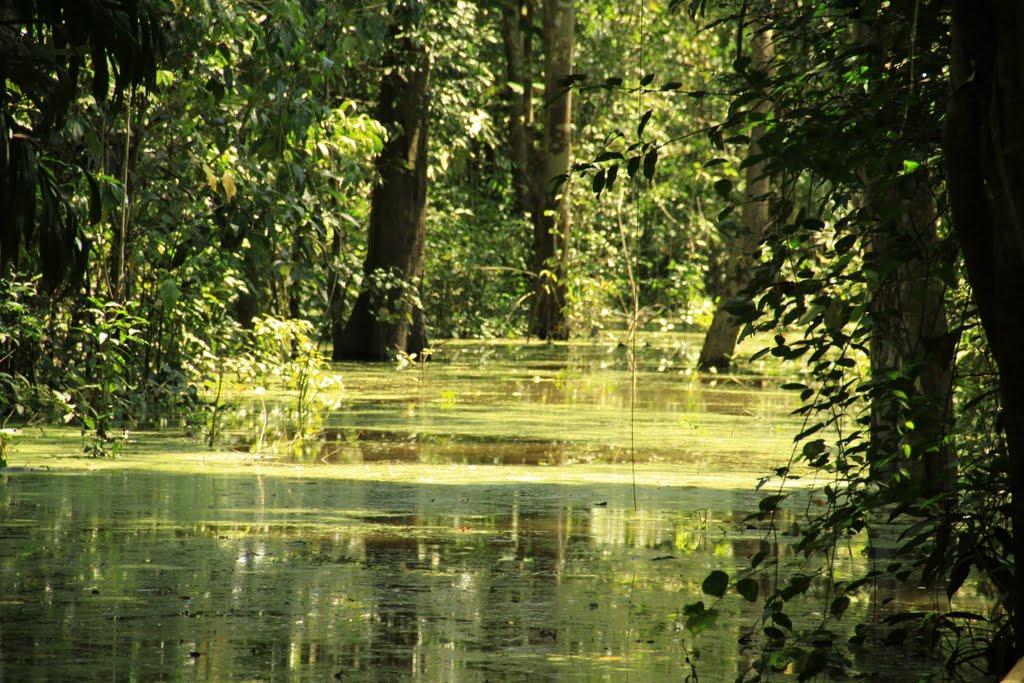 floresta inundada manaus