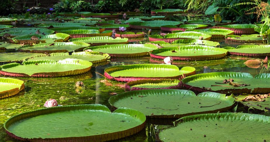 O que fazer em Manaus: Parque Ecológico do Lago Janauari